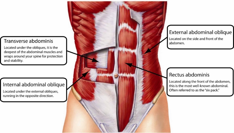 core-muscles-labled-front-768x439